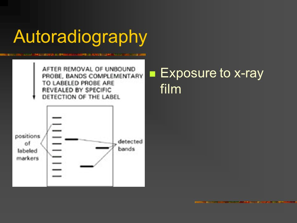 Autoradiography Exposure to x-ray film