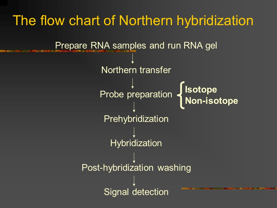The flow chart of Northern hybridization