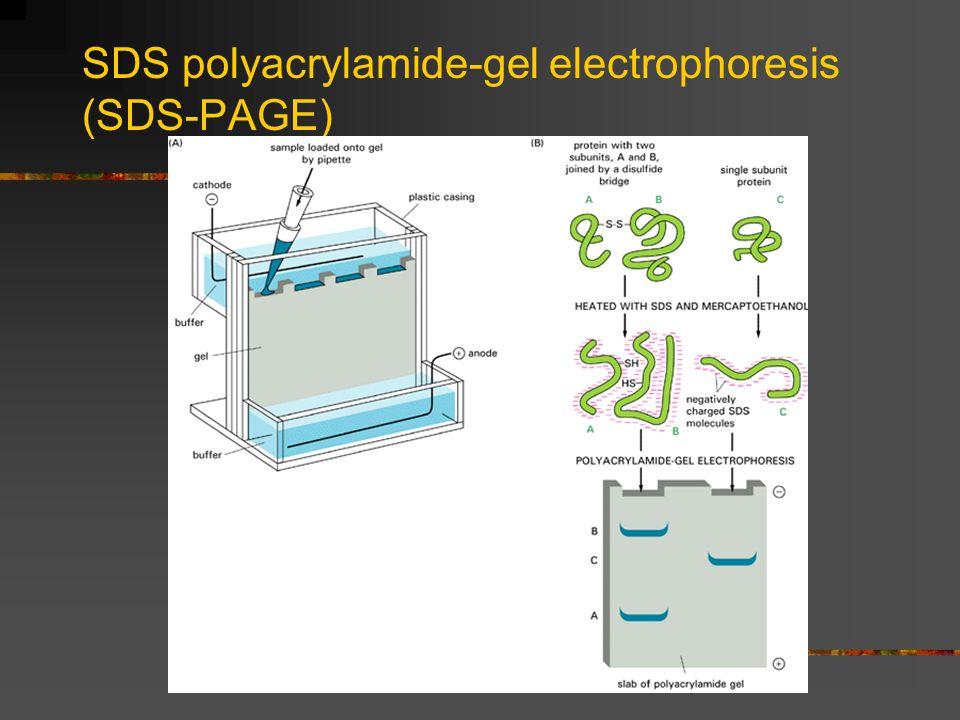 SDS polyacrylamide-gel electrophoresis (SDS-PAGE)