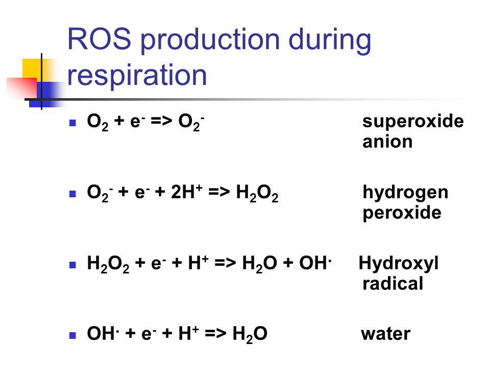 ROS production during respiration