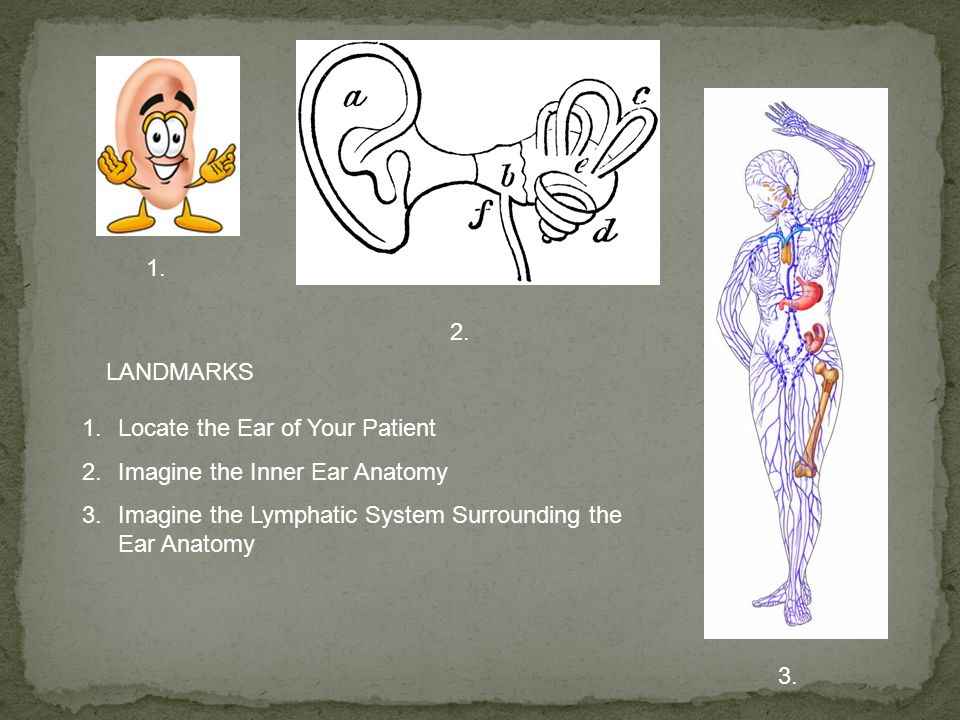 1. 2. LANDMARKS. Locate the Ear of Your Patient. Imagine the Inner Ear Anatomy. Imagine the Lymphatic System Surrounding the Ear Anatomy.