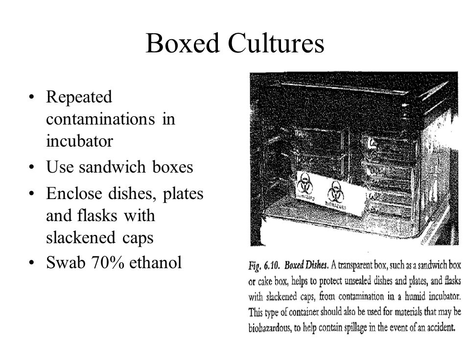Boxed Cultures Repeated contaminations in incubator Use sandwich boxes