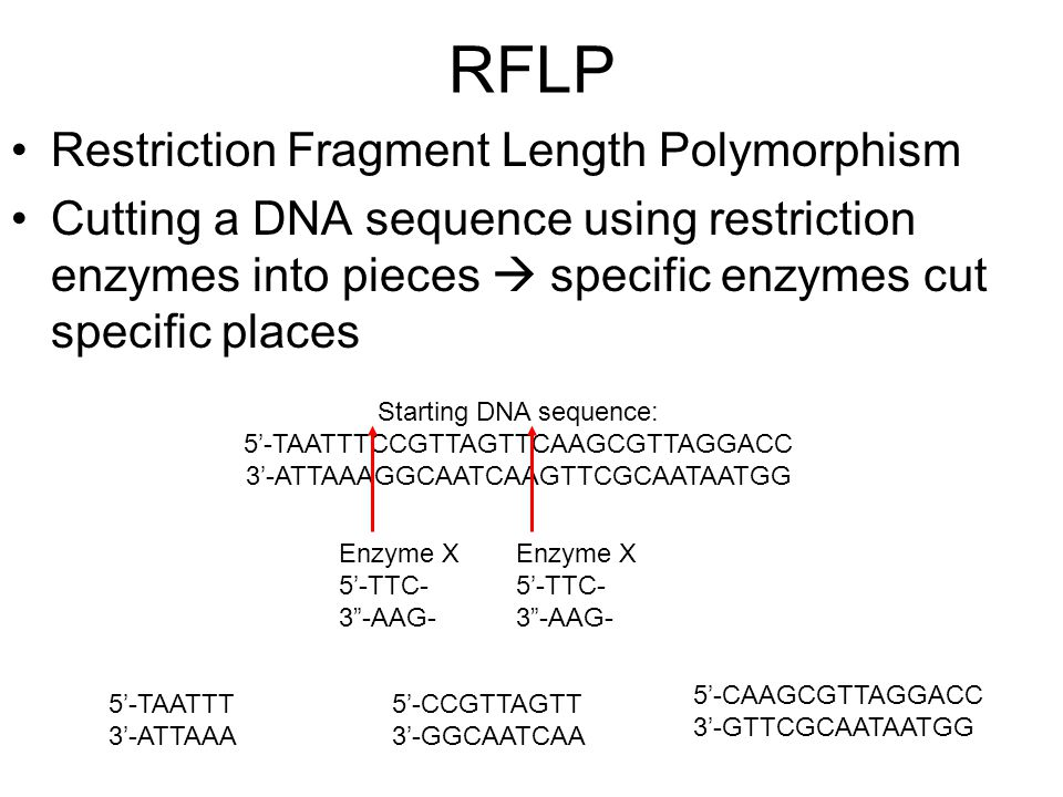 RFLP Restriction Fragment Length Polymorphism
