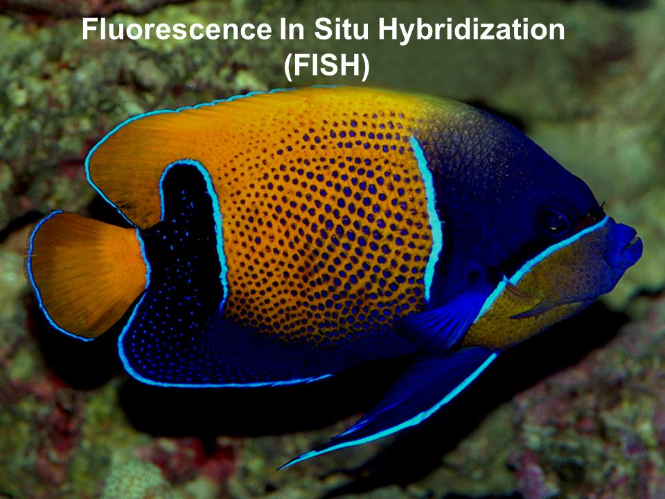 Fluorescence In Situ Hybridization (FISH)