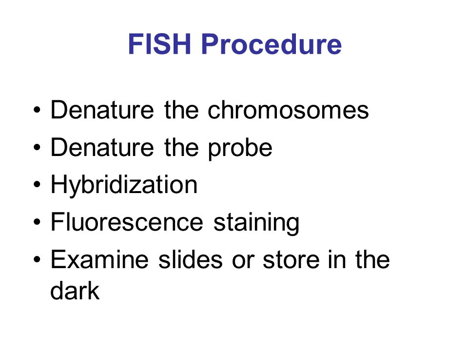 FISH Procedure Denature the chromosomes Denature the probe