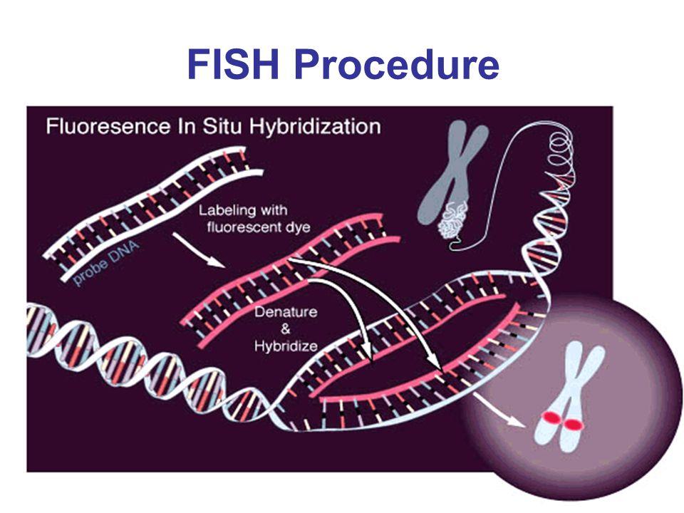 FISH Procedure