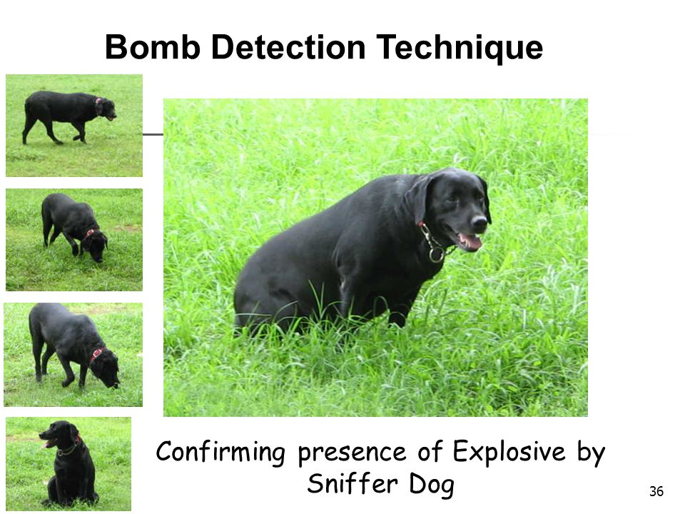 Confirming presence of Explosive by Sniffer Dog