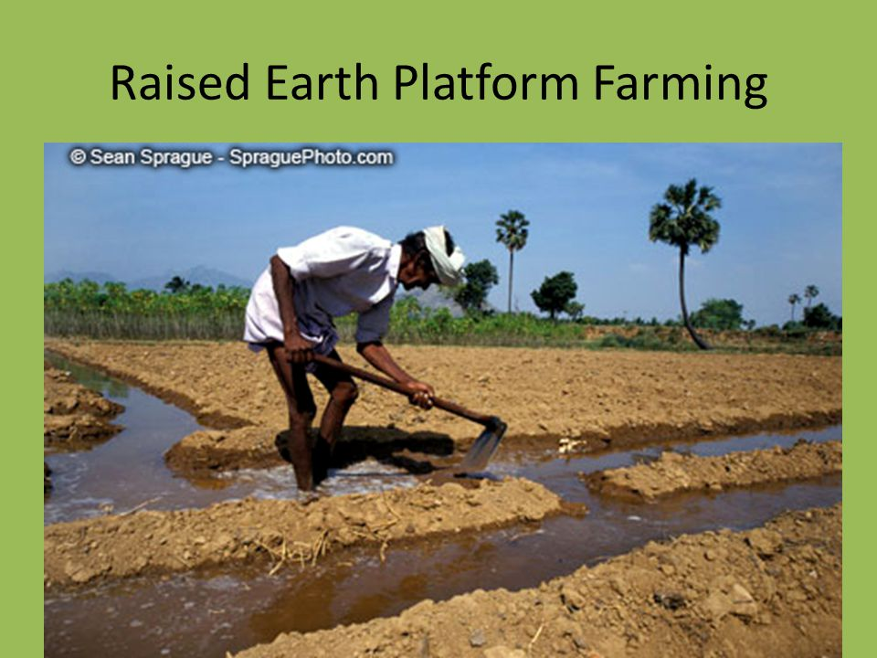 Raised Earth Platform Farming