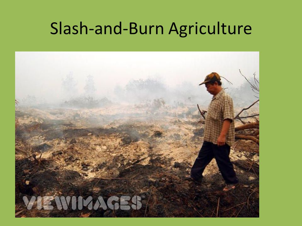 Slash-and-Burn Agriculture