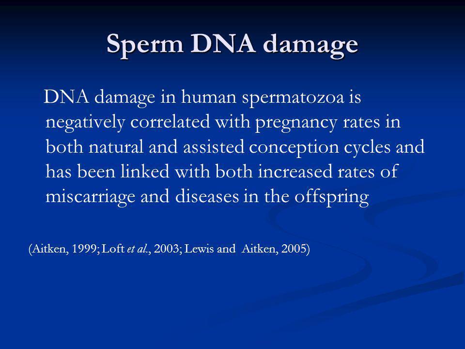 Sperm DNA damage