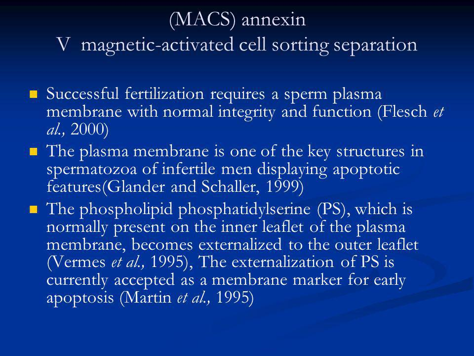 (MACS) annexin V magnetic-activated cell sorting separation
