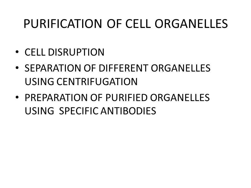 PURIFICATION OF CELL ORGANELLES