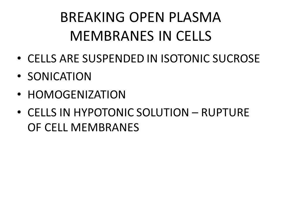 BREAKING OPEN PLASMA MEMBRANES IN CELLS