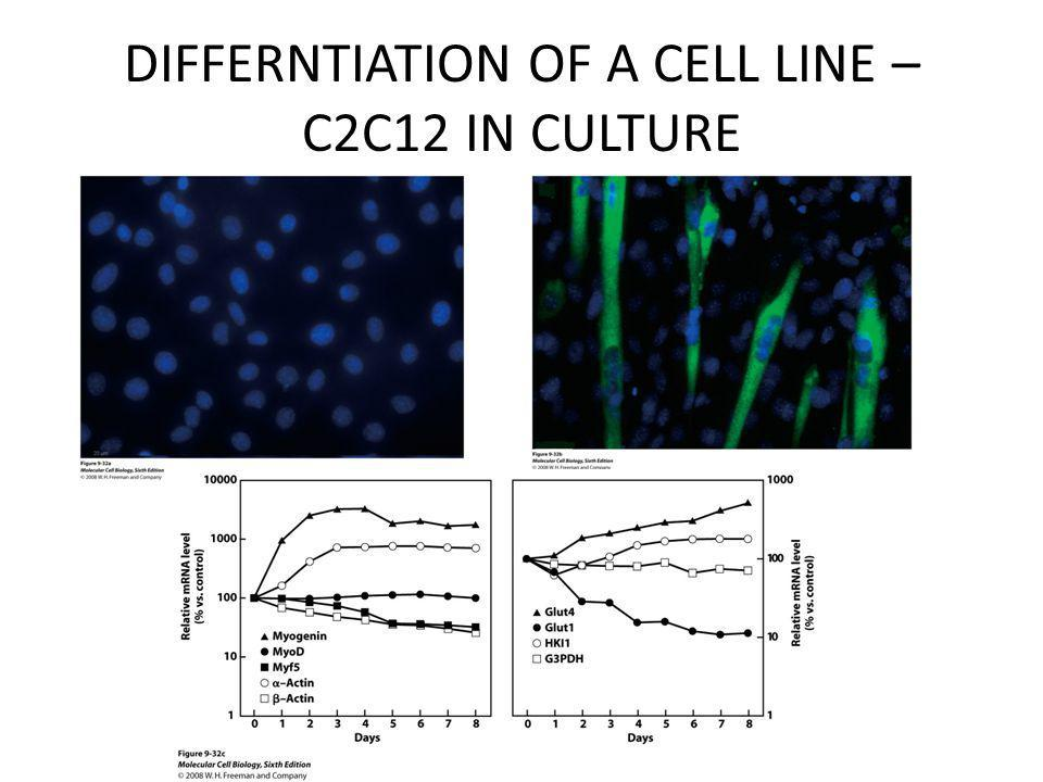 DIFFERNTIATION OF A CELL LINE – C2C12 IN CULTURE