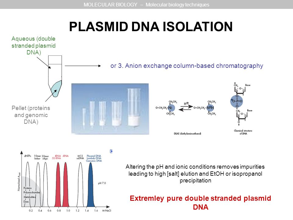 Extremley pure double stranded plasmid DNA