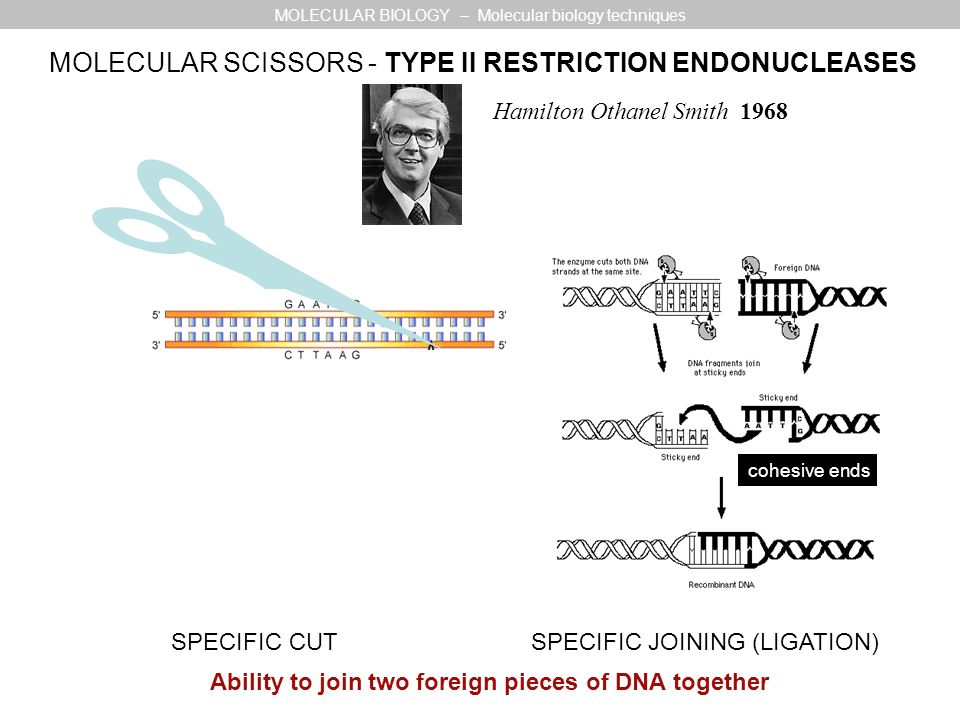 Ability to join two foreign pieces of DNA together