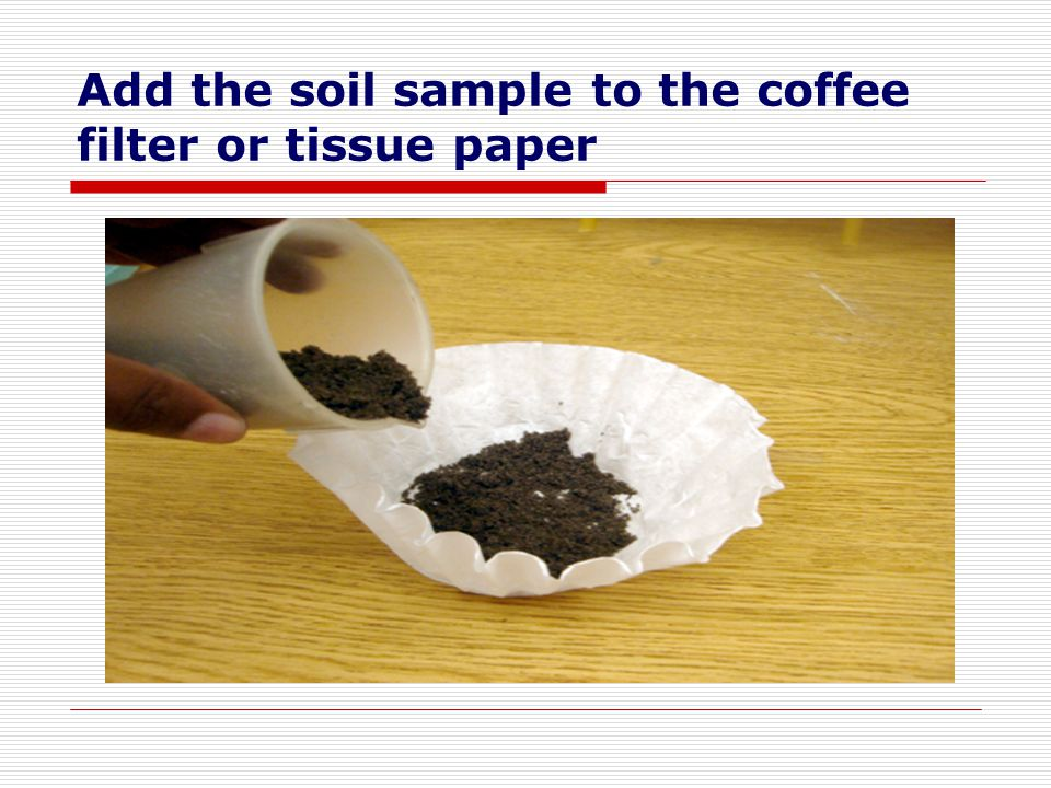Add the soil sample to the coffee filter or tissue paper