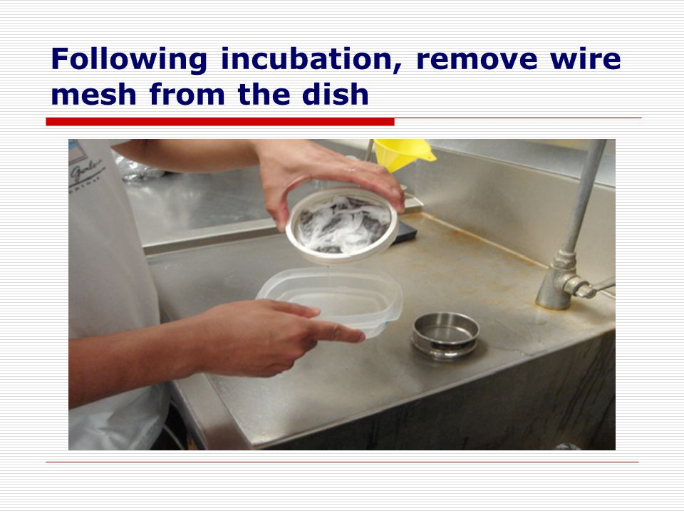 Following incubation, remove wire mesh from the dish