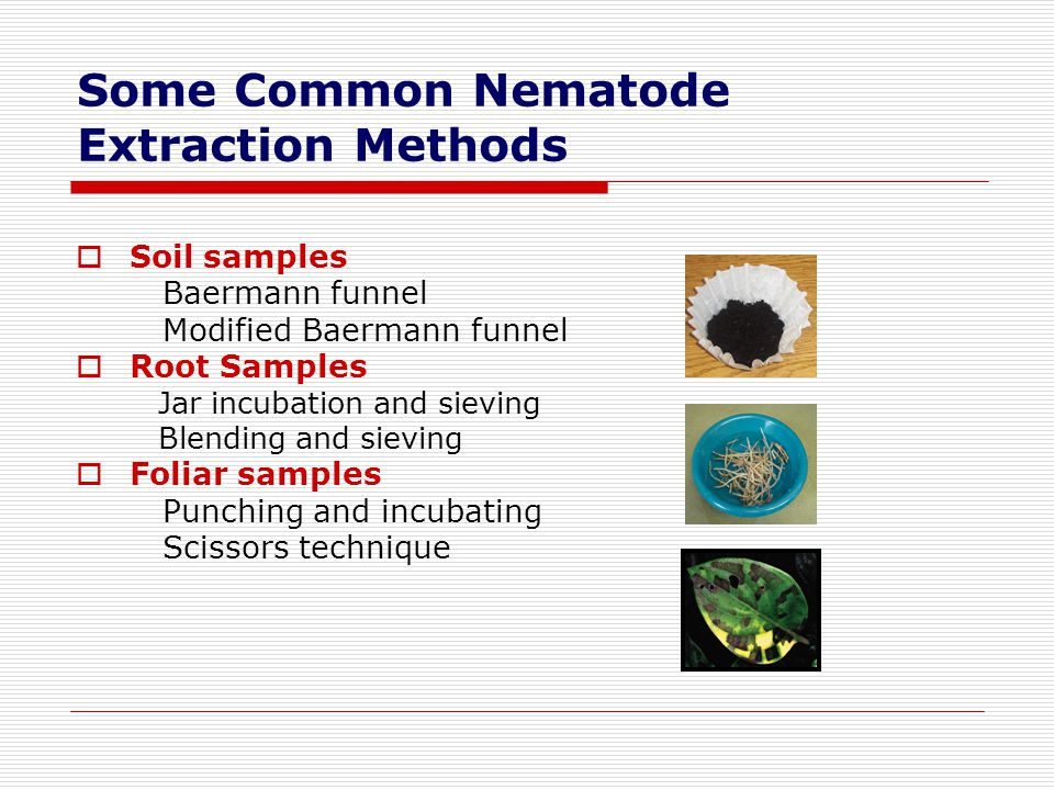 Some Common Nematode Extraction Methods
