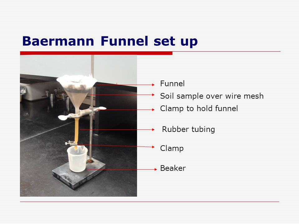 Baermann Funnel set up Funnel Soil sample over wire mesh
