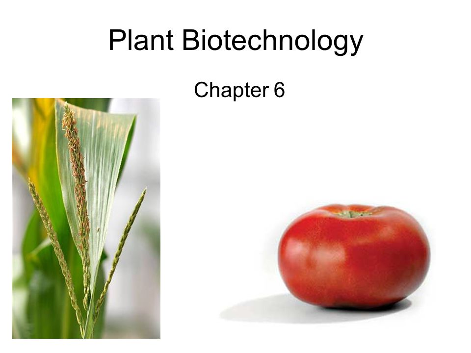 Plant Biotechnology Chapter 6