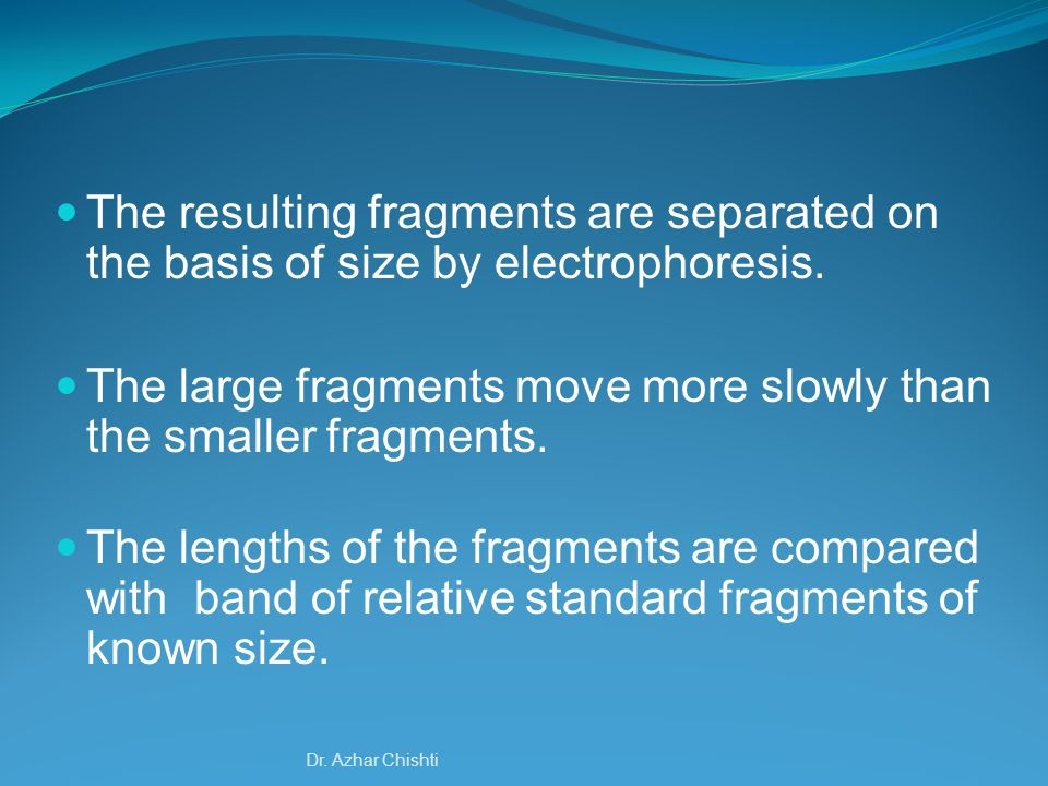 The large fragments move more slowly than the smaller fragments.