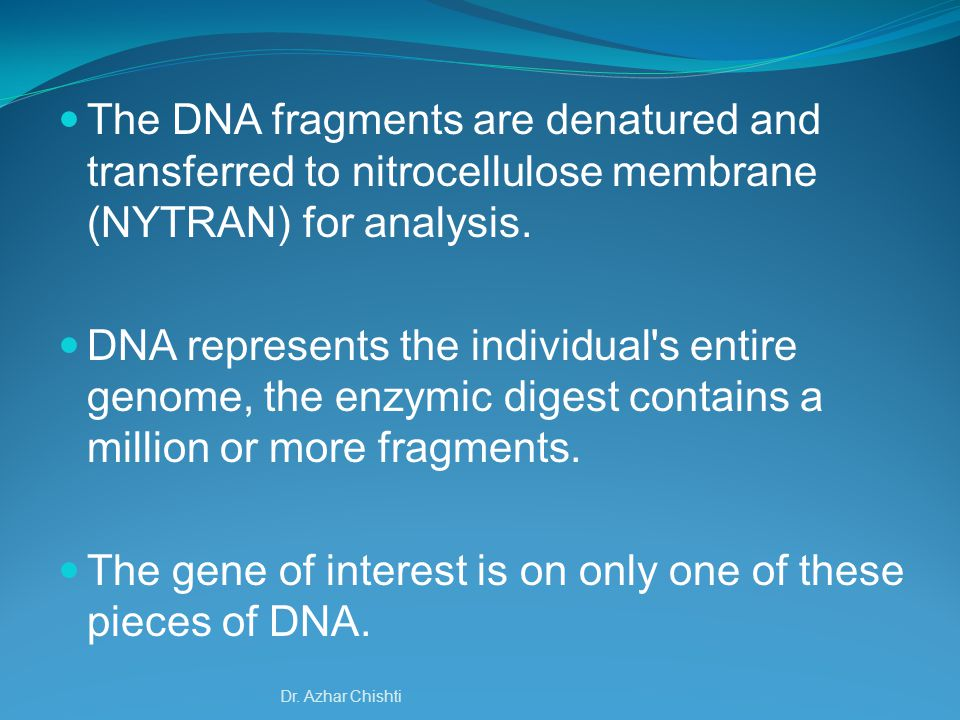 The gene of interest is on only one of these pieces of DNA.