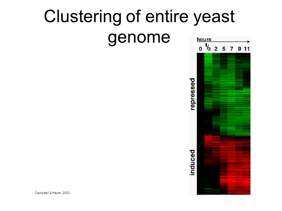 Clustering of entire yeast genome