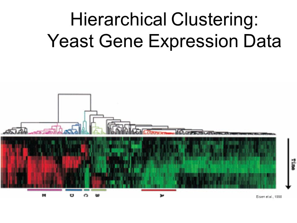 Hierarchical Clustering: Yeast Gene Expression Data