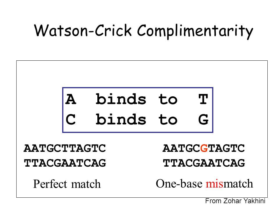 Watson-Crick Complimentarity