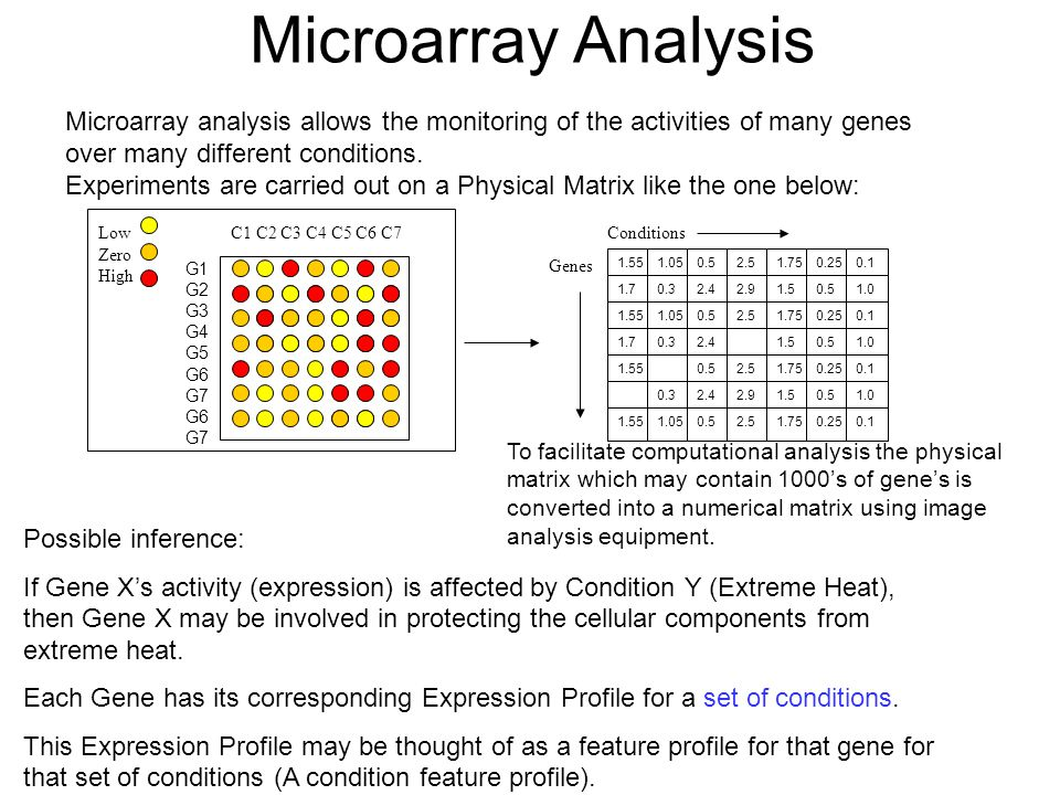 Microarray Analysis Microarray analysis allows the monitoring of the activities of many genes over many different conditions.