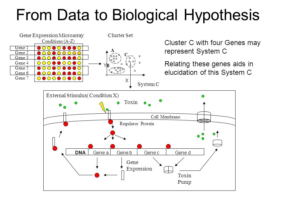 From Data to Biological Hypothesis