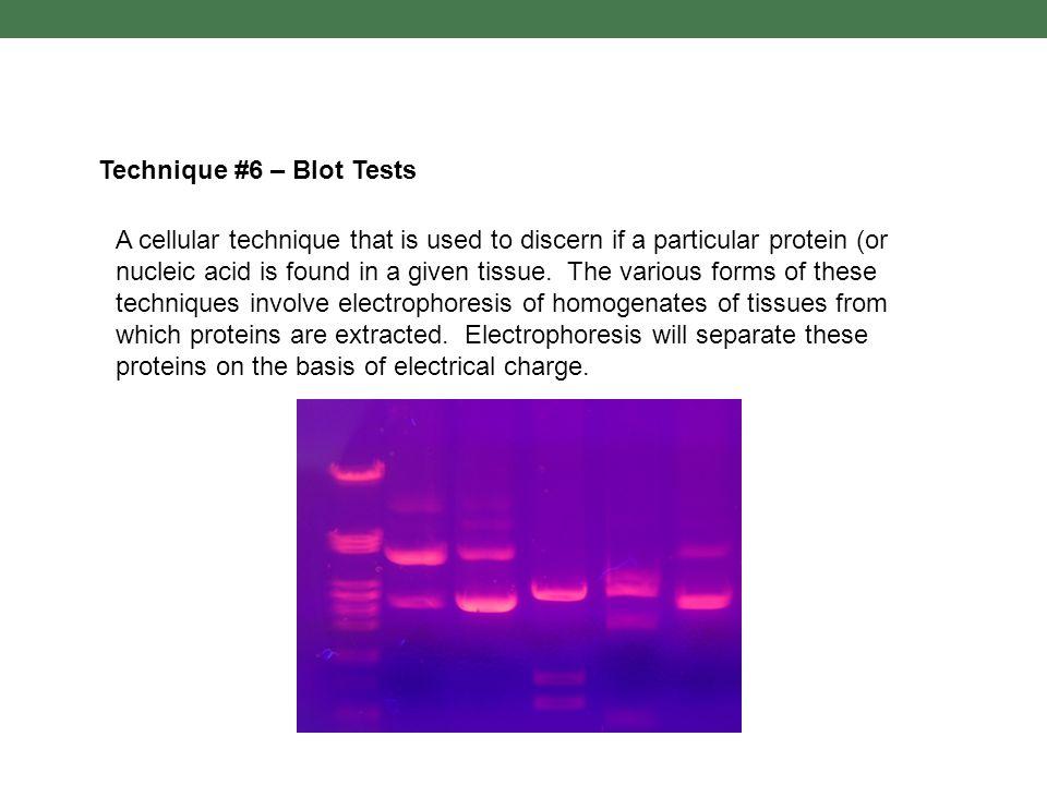 Technique #6 – Blot Tests
