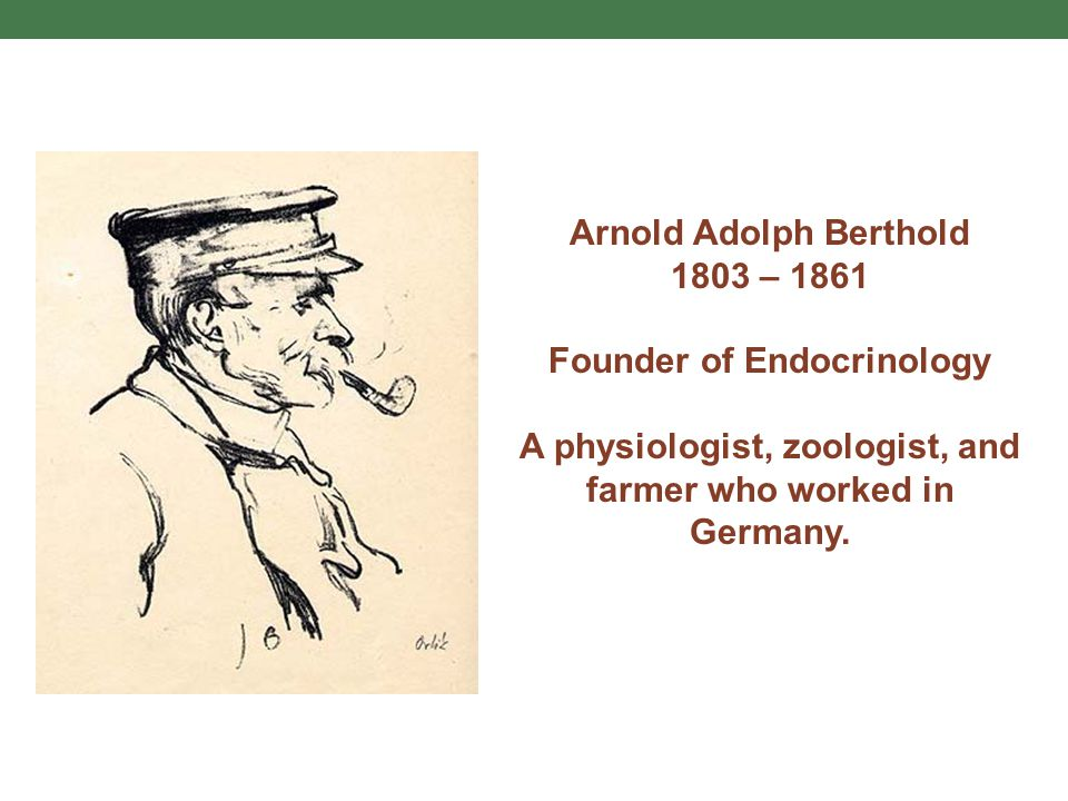 Arnold Adolph Berthold 1803 – 1861 Founder of Endocrinology