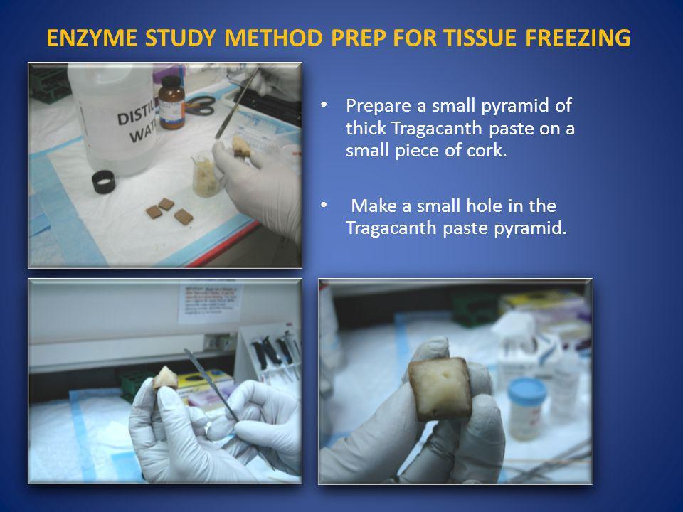 ENZYME STUDY METHOD PREP FOR TISSUE FREEZING