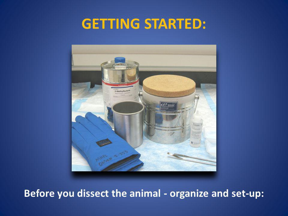 Before you dissect the animal - organize and set-up: