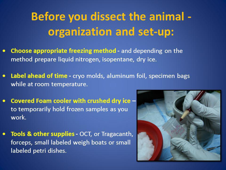 Before you dissect the animal - organization and set-up: