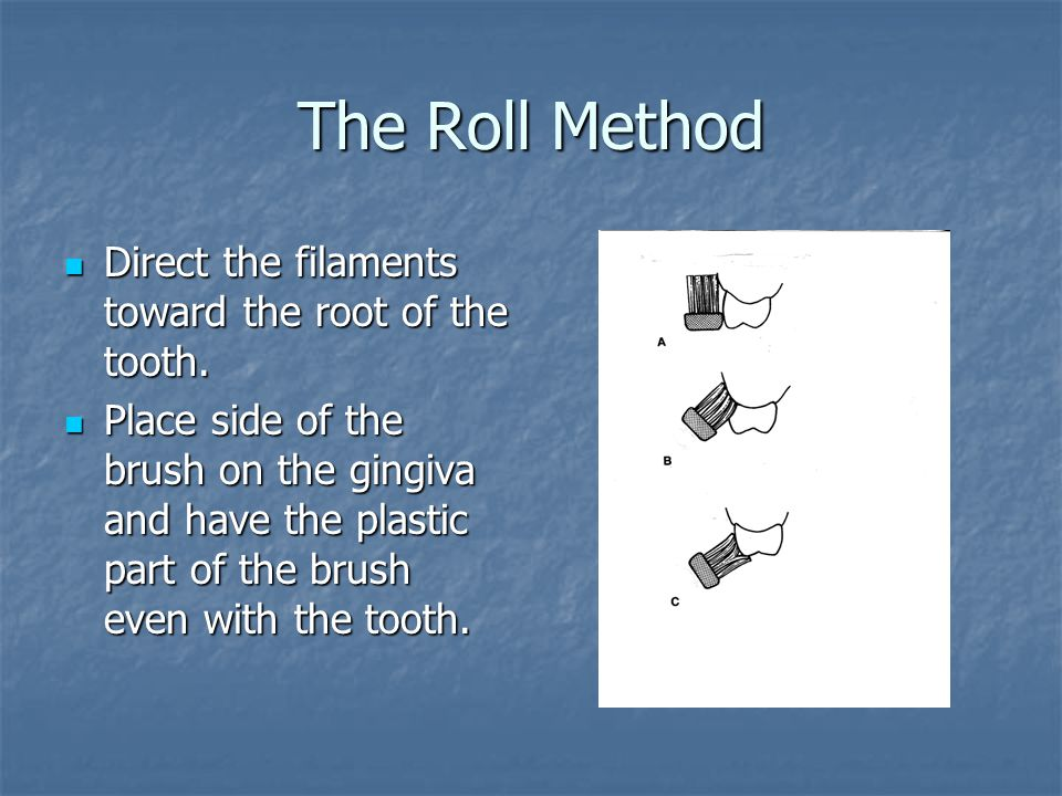 The Roll Method Direct the filaments toward the root of the tooth.