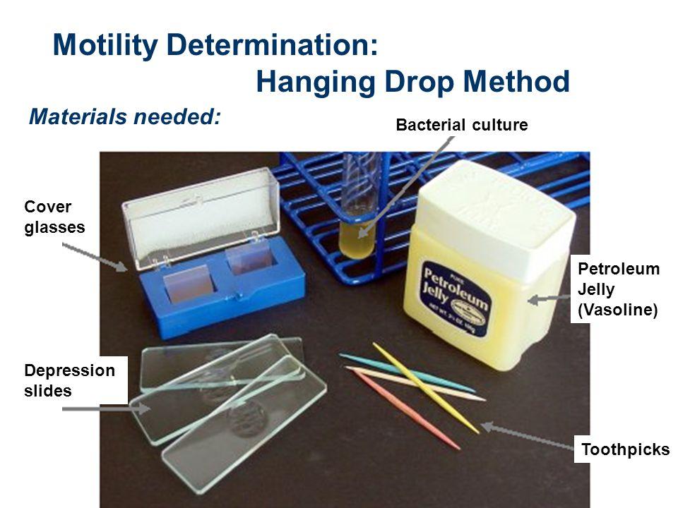Motility Determination: Hanging Drop Method