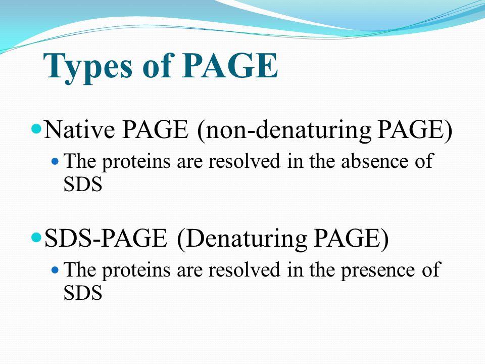 Native PAGE (non-denaturing PAGE)