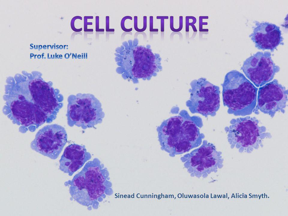 Cell culture Supervisor: Prof. Luke O'Neill