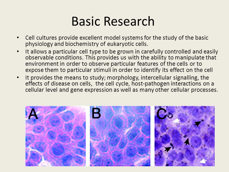 Basic Research Cell cultures provide excellent model systems for the study of the basic physiology and biochemistry of eukaryotic cells.