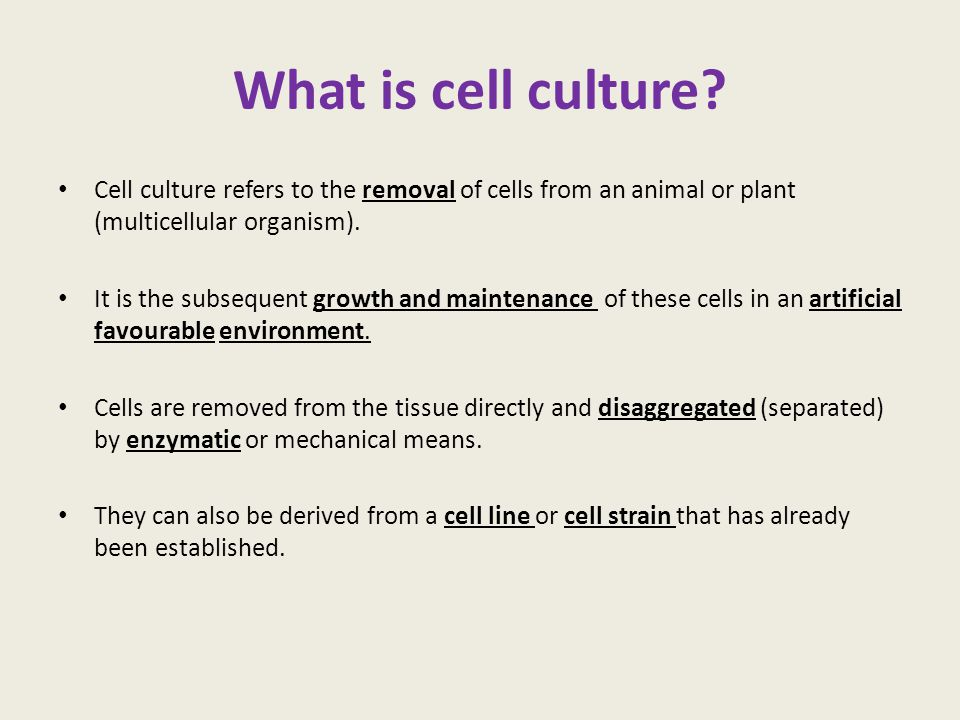 What is cell culture Cell culture refers to the removal of cells from an animal or plant (multicellular organism).