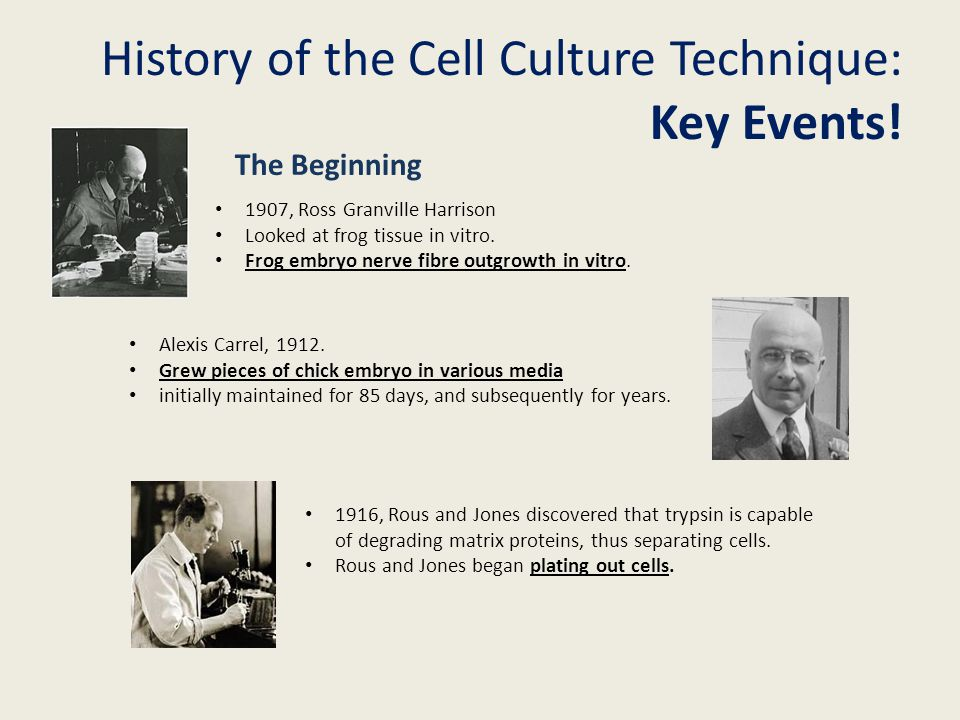 History of the Cell Culture Technique: Key Events!