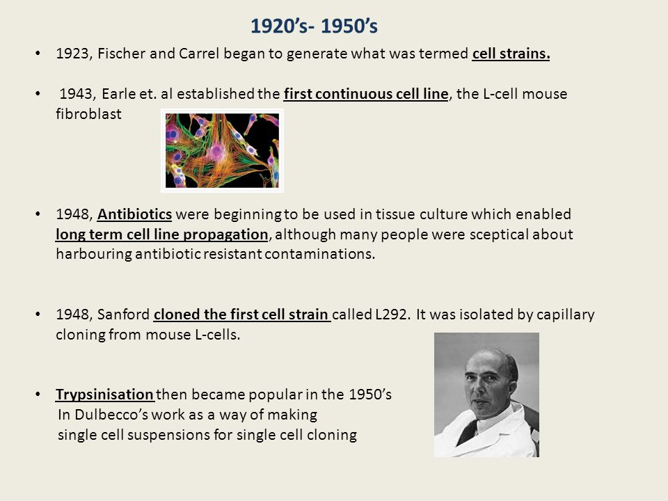 1920's- 1950's 1923, Fischer and Carrel began to generate what was termed cell strains.