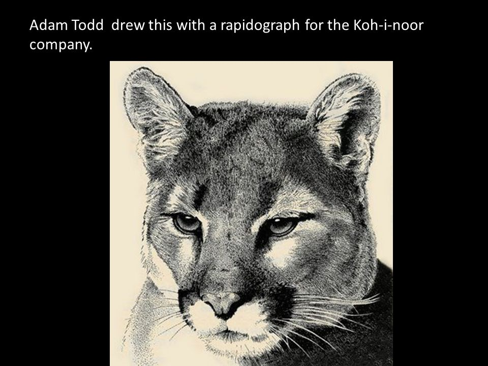 Adam Todd drew this with a rapidograph for the Koh-i-noor company.