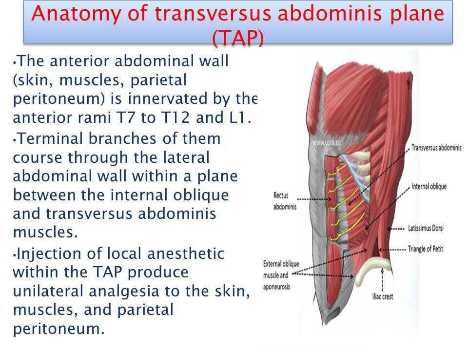 Anatomy of transversus abdominis plane (TAP)