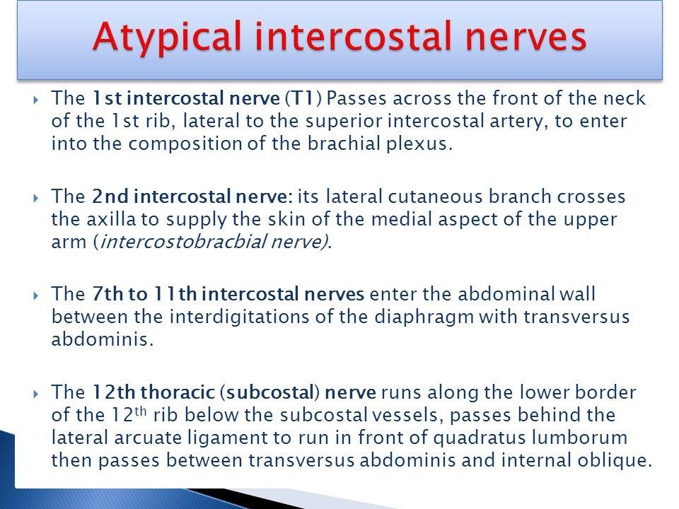 Atypical intercostal nerves