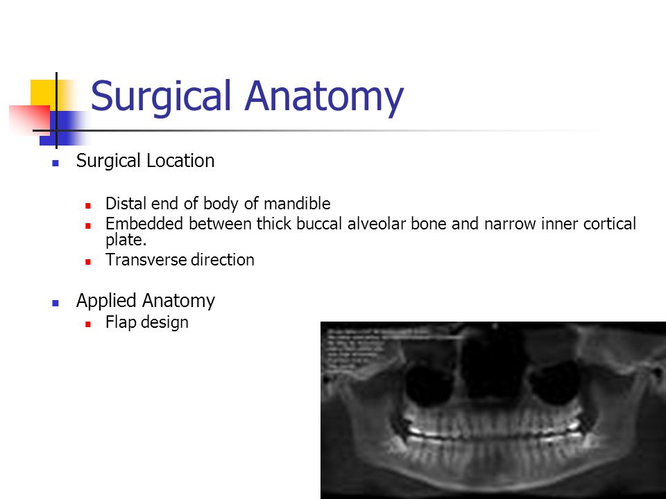 Surgical Anatomy Surgical Location Applied Anatomy