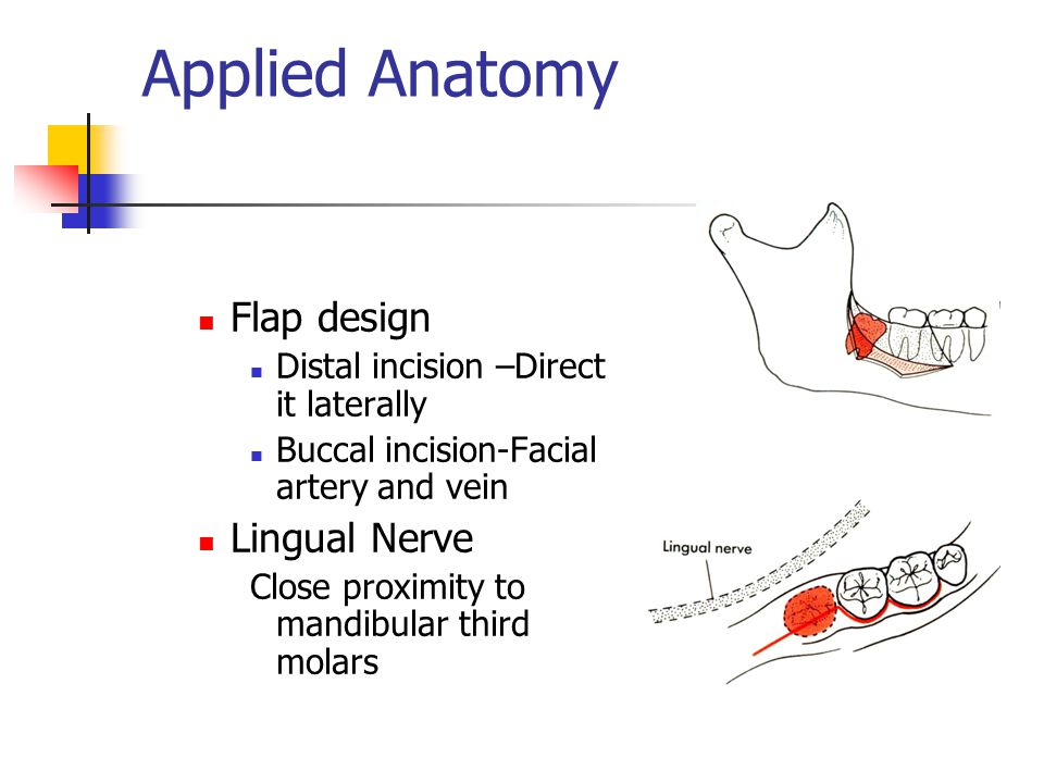 Applied Anatomy Flap design Lingual Nerve